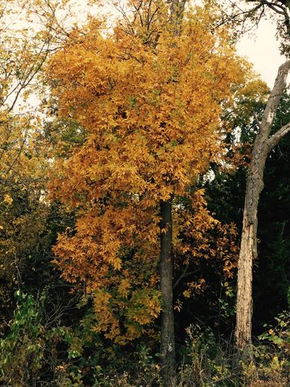 golden tree_websize