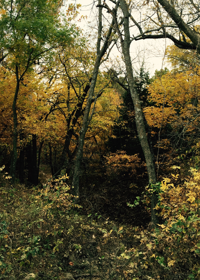 wooded draw_fall_websize