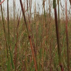 Climate Change: Testing the Resilience of Flint Hills Prairies