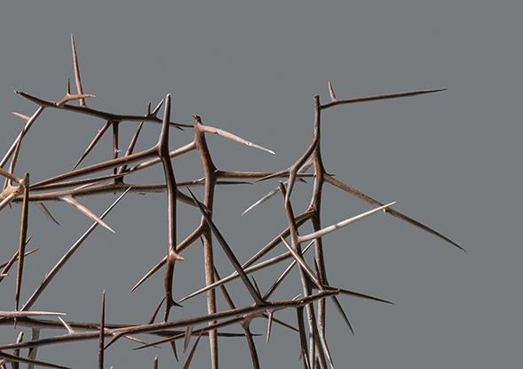 Susan White, Sentinel II (detail), honey locust thorns. Photo by E. G. Schempf